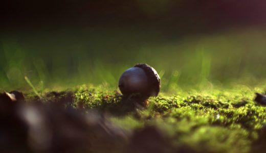 「言葉のチカラ」~リスの忘れ物が森を創る~